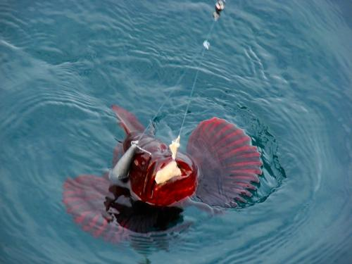рыбалка черное море август